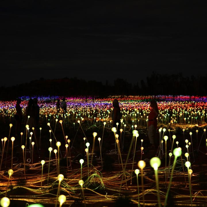 Field of light up close