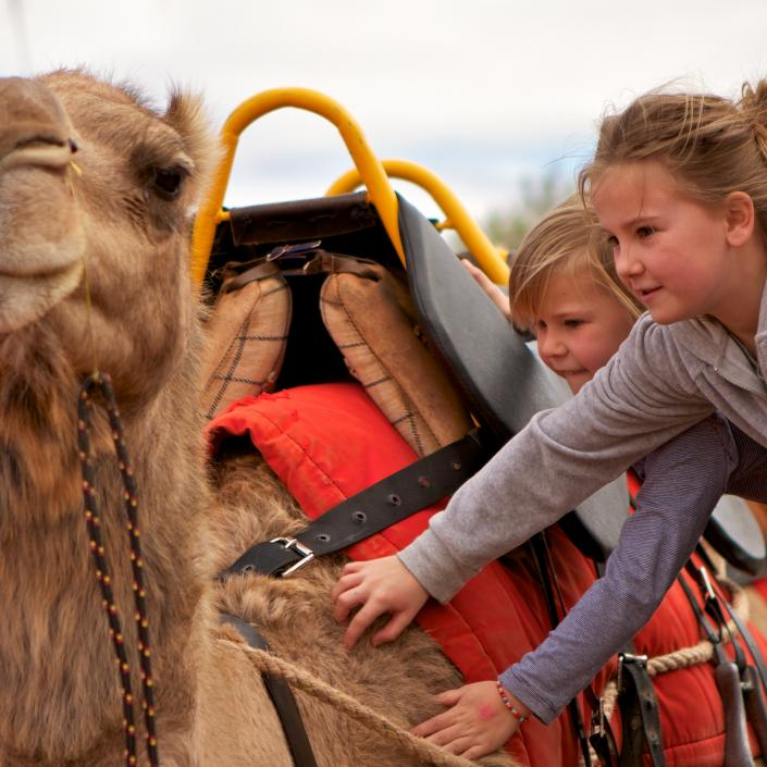 camel and kids